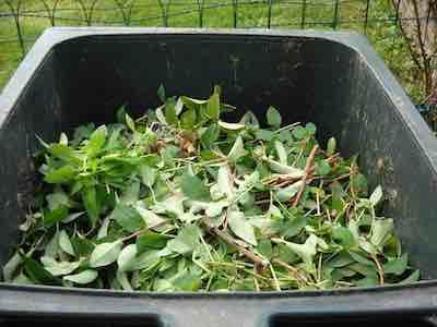 Garden organic waste