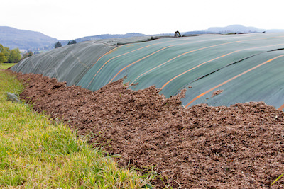 Manure feedstock for biogas production